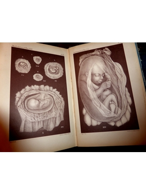 Evolution of Man, Ernst Haeckel, 2 large volumes 1905, Watts & Co, London