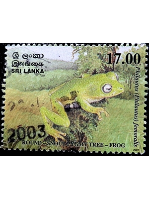 Sri Lanka, Wild Life, Round snout pygmy tree frog, 17 Rupees,  2001 used