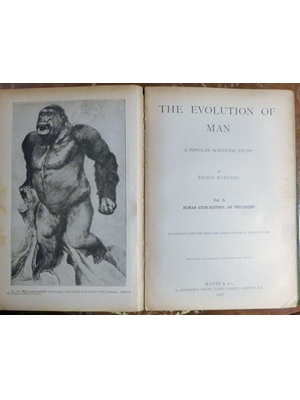The Evolution of Man by Ernst Haeckel, Volume I Embryology and  Ontogeny, Volume II Human Stem History or Phylogeny Ernest Haeckel, 1906 good copy