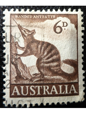 Australia, Animals, Banded Anteater, 6d brown 1959
